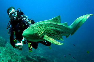 Sharks Point Scuba Diving Tour from Phuket