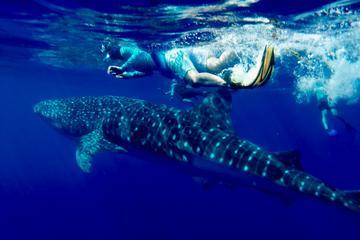 COMBO Ocean Adventure: Dolphins...