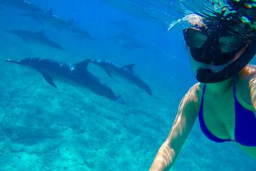 Wild Dolphin Swim and Reef Snorkeling Excursion