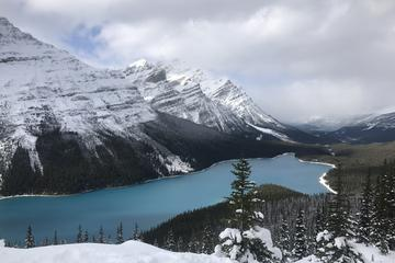 Lake Louise and the Icefield Parkway...