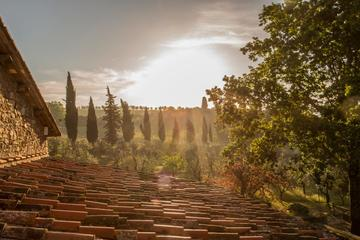 Buongiorno Tuscany Wine Tour in Chianti Wine Region and visit San Gimignano
