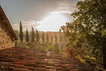 Gastronomic & Wine Experience in Tuscany (Chianti)