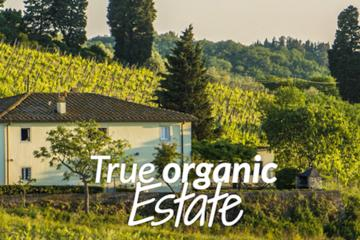 ORGANIC BIO WINE & FOOD TOUR! - Chianti Wine Tour in Tuscany