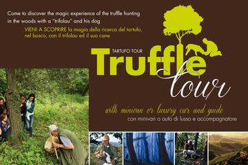 Truffles, Chianti Wine & Olive Oil Tour with stop in Pisa