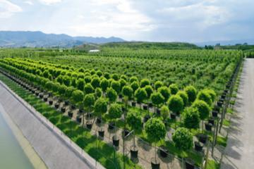 Visit the Garden of Eden - the biggest Nursery in Europe with authentic with wine-olive oil tasting