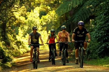Rimutaka Rail Trail Cycle Tour from Wellington
