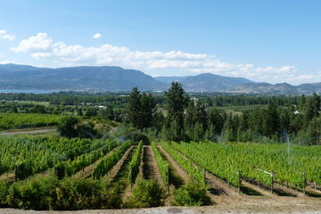 Day Trip 4-Hour Okanagan Valley Wine Tasting Tour of the  Kelowna Lakeshore Wine Route near Kelowna, Canada