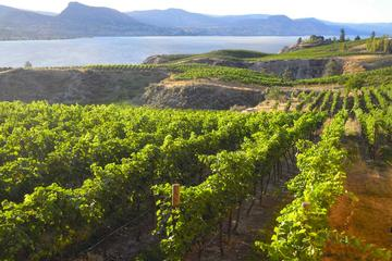 Book Small-Group Tour: Naramata Bench Wine Tastings and Countryside on Viator