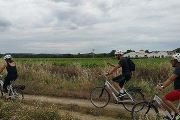 CYCLING THROUGH THE VINEYARDS (THE SUSTAINABLE VISIT)