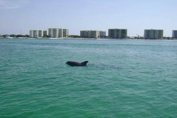 Book Private Dolphin Tour on a Jet Ski from Destin on Viator