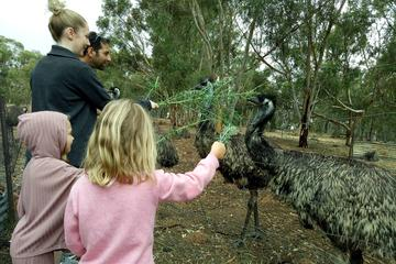 Full-Day Nature Tour from Perth