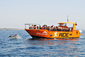 Dolphin Watching and Caves Cruise