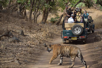 Wildlife Ranthambore Tiger safari Tour With Agra and Jaipur 04 Nights 05 Days