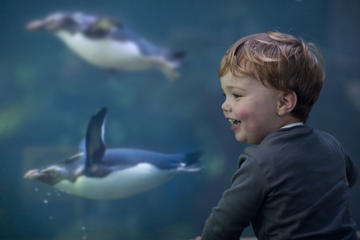 Hopp over linjen: To Oceans Aquarium...