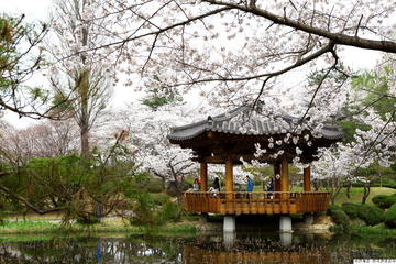 Full day Gyeongju Cherry Blossom Festival Tour