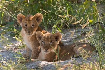 4 Days Victoria Falls Zimbabwe with ...