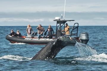 Book Six Passenger Whale Watching and Coastal Tour on Viator