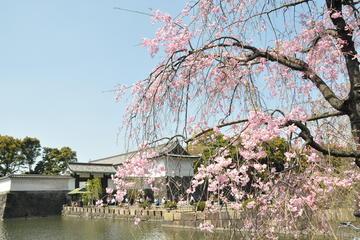 Enjoy Japanese culture, KIMONO & cherry blossom viewing in Marunouchi