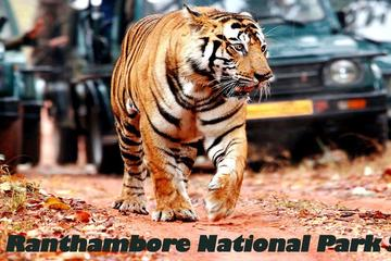 04-Days Private Taj Mahal & Ranthambore Wildlife Safari Tour from Delhi