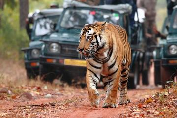 07-Days Private Golden Triangle Tour with Ranthambhore Tiger Reserve from Delhi