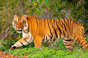 Private Corbett National Park & Nainital Tour from New Delhi