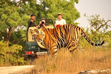 Same Day Trip to Ranthambore