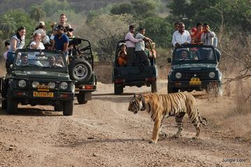 Ranthambore National Park - A Two Night Wildlife Adventure From Jaipur By Private Transfer