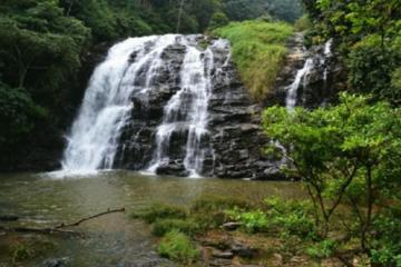 The Beauty And Culture Of Coorg - From Bangalore With Private Transfer