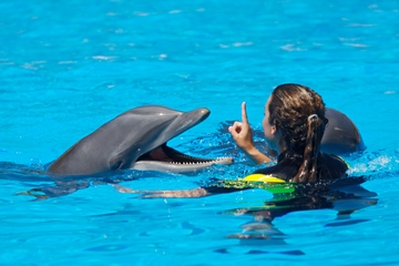 Dresseur de dauphins d'un jour à Cancun