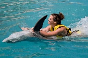 Programa para nadar con delfines y montar en ellos en Cozumel