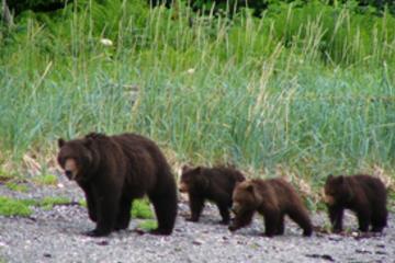 Excursão ao litoral de Juneau: excursão exclusiva à área de...