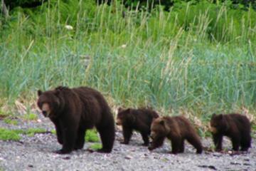 Excursión por la costa de Juneau: Observación exclusiva de osos...