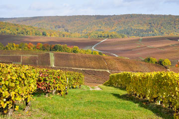 Champagneproeverij vanuit Parijs: Moët et Chandon, Hautvillers en Mumm