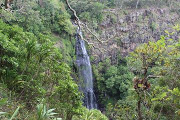 Gold Coast Lamington National Park Tour