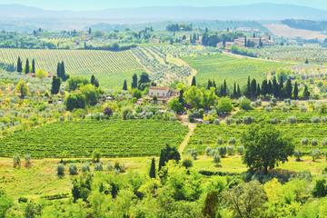 Aula de culinária semiparticular com Chianti em uma vila da Toscana...