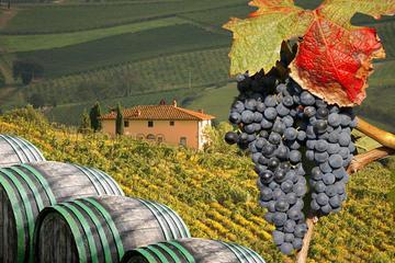 Excursão para grupos pequenos para degustação de vinhos na Toscana...