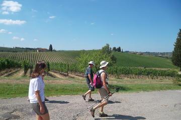 Recorrido de senderismo en la Toscana desde Florencia con cata de...