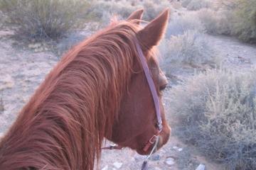 Rit te paard langs de Old Spanish ...