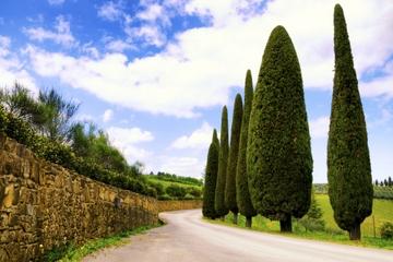 Aperçu du Chianti: fromage toscan et vin et déjeuner de Florence