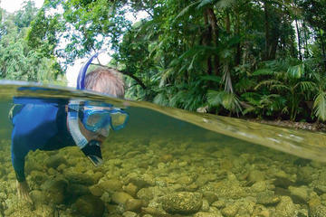 Mossman River Drift Snorkelling from...