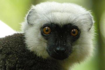 20 Day Tour of Madagascar