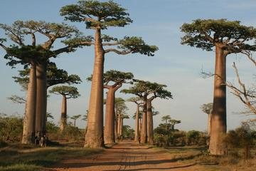 5 Day Tour Baobab Avenue Express from...