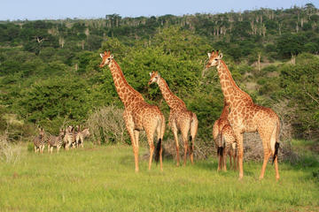 Angola Essential Odyssey: Luanda - Kissama Park  Kwanza River - Kalandula Falls