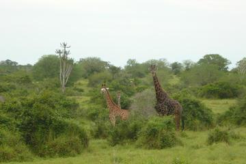 Excursion d'une journée de Luanda au...