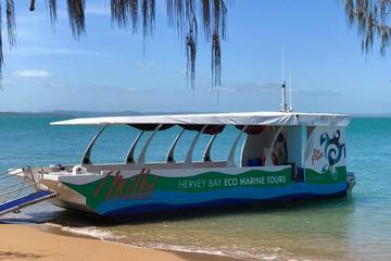 Great Sandy Marine Park Discovery Cruise from Hervey Bay