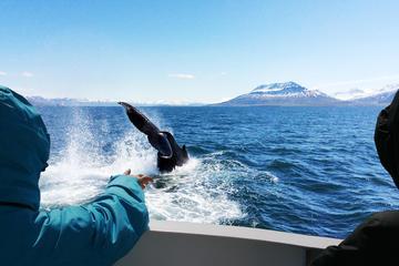 Reykjavik Whale Watching Tour