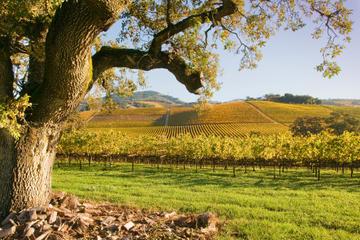 Ausflug in die Weinbaugebiete von Napa und Sonoma in kleiner Gruppe...
