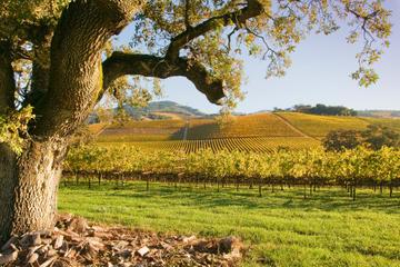Tour per piccoli gruppi nelle regioni vinicole di Napa e Sonoma con