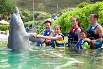 Nadar con delfines en el acuario Sea Life Park en Oahu