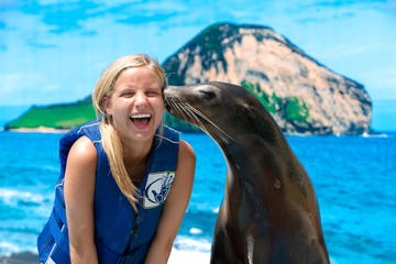 Swim with Sea Lions or Sharks at Sea...